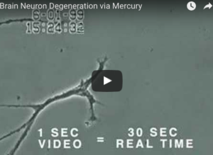 Neuron Degeneration from Mercury