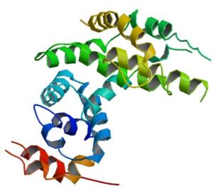 NF1 Neurofibromin
